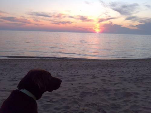 Mojo Sunrise